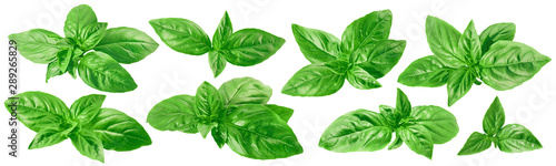 Leinwand Poster Fresh green basil set isolated on white background