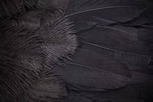 Black Feathers Abstract Background. Top View, Flat Lay