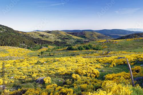 Papiers peints Orange Lozère au printemps vue sur les montagnes par beau temps avec fleurs jaunes