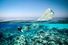 Underwater Photo Of Ocean And ...