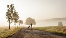Gassi Gehen Mit Dem Hund Bei Wunderschönem Morgennebel