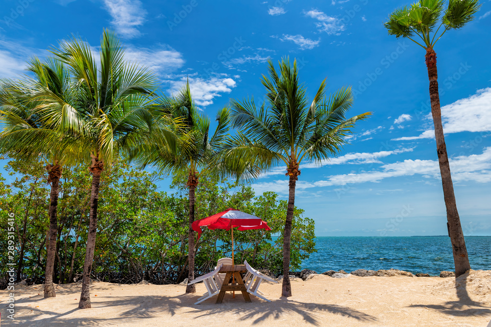 Fototapety, obrazy: Chairs under umbrella and palm trees on a tropical beach in Key Largo island, Florida.
