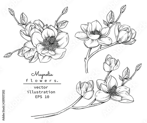 Sketch Floral Botany Collection Canvas Print