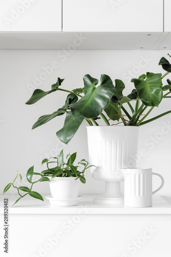 Photo Modern houseplants on a white drawer in the white living room, minimal creative