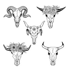 Hand Drawn Buffalo Skull Nativ...