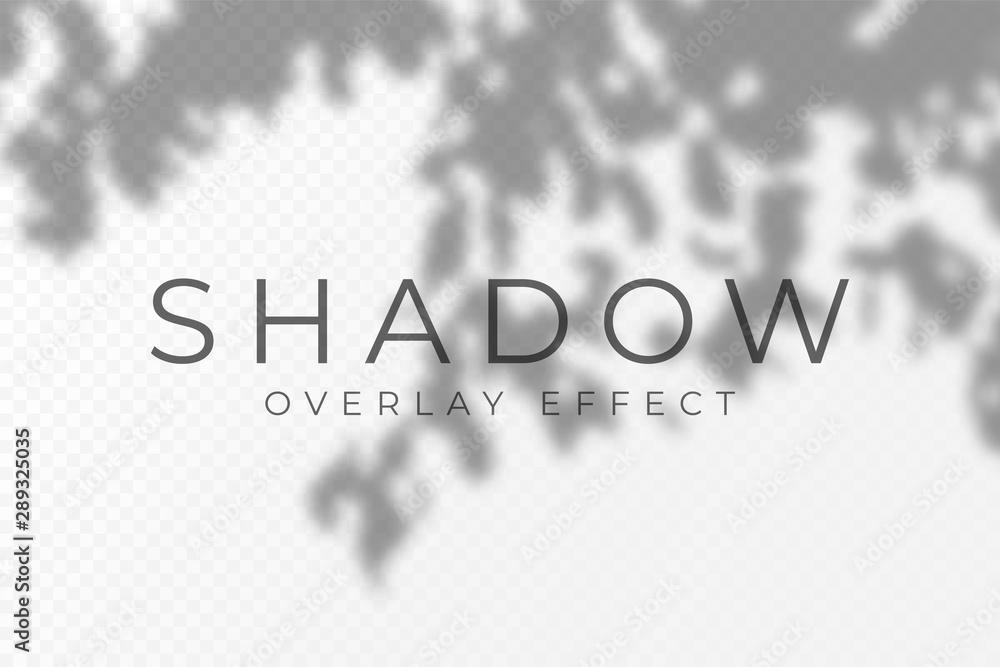 Fototapeta Shadow overlay effect. Transparent soft light and shadows from plant branches, leaves and foliage. Mockup of transparent shadow overlay effect and natural lightning