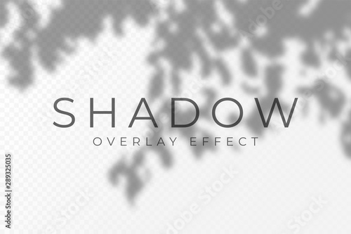 Shadow overlay effect. Transparent soft light and shadows from plant branches, leaves and foliage. Mockup of transparent shadow overlay effect and natural lightning