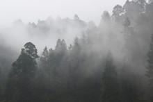 Forrest  Landscape With Mushro...