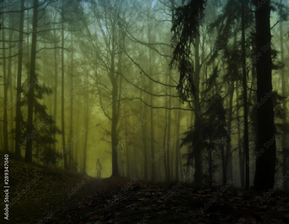 Fototapeta Dark creepy foggy forest