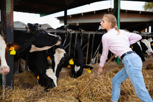 Obraz na plátně  Confident young female owner of small dairy farm working in stall, feeding cows