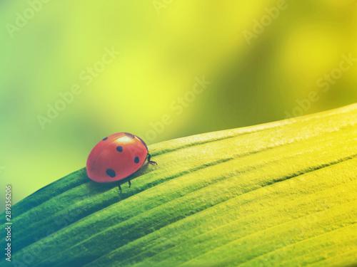 ladybug on leaf Wallpaper Mural