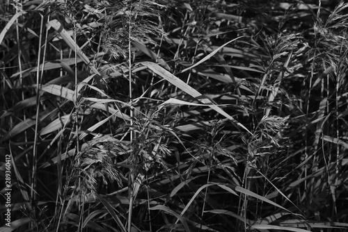 Montage in der Fensternische Darknightsky Hylotelephium spectabile