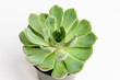 Round fresh succulent plant in a black pot isolated on white, side view, with space for text