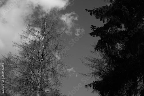 Montage in der Fensternische Darknightsky Black and white trees