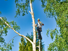 Mature Male Tree Trimmer High ...