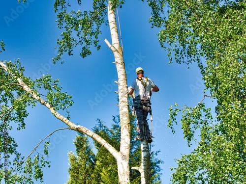 Pinturas sobre lienzo  Mature male tree trimmer high in birch tree, 30 meters from ground, cutting bran