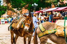 View On Mules In The Colonial Village Of Jerico, Colombia