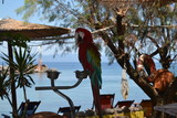 Fototapeta Tęcza - Papuga ara
