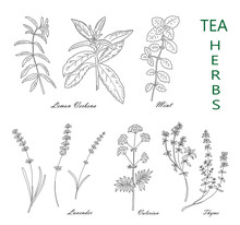 Tea Herbs Set Isolated On Whit...