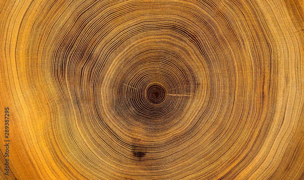 Fototapety, obrazy: Old wooden oak tree cut surface. Detailed warm dark brown and orange tones of a felled tree trunk or stump. Rough organic texture of tree rings with close up of end grain.