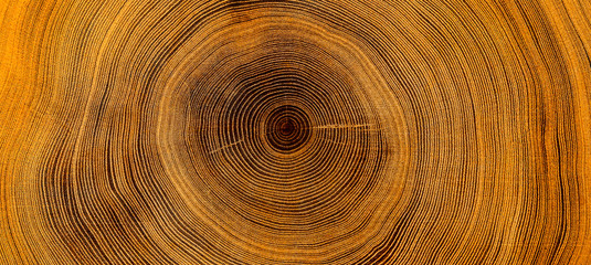 Old wooden oak tree cut sur...