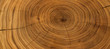 Leinwandbild Motiv Old wooden oak tree cut surface. Detailed warm dark brown and orange tones of a felled tree trunk or stump. Rough organic texture of tree rings with close up of end grain.