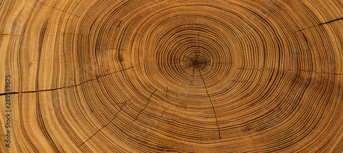 Old wooden oak tree cut surface. Detailed warm dark brown and orange tones of a felled tree trunk or stump. Rough organic texture of tree rings with close up of end grain. - 289389675