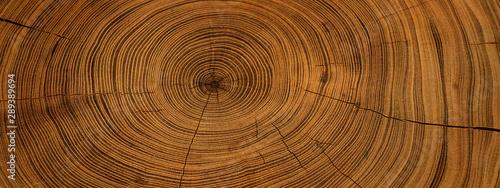Cuadros en Lienzo  Old wooden oak tree cut surface