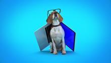 Business Concept Pet Dog Using Laptop Computer. 3d Rendering