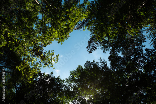 Fotomural Bottom up view of blue sky framed by tree leaves and palm trees with white copy