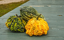 Warty Pumpkins And Gourds