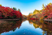 Kumobaike Pond Autumn Foliage ...