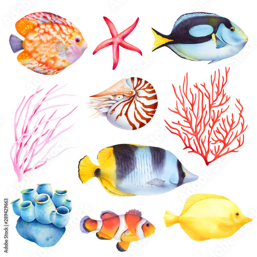 Set of coral reef animals. Sea anemone, nautilus, butterfly fish, starfish. Isolated watercolor illustration.