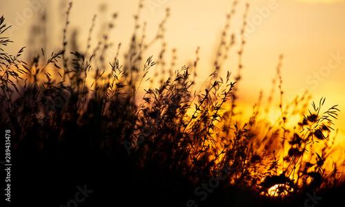 Spoed Fotobehang Meloen Plants in the field at sunset