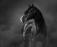 Black-and-White Portrait Of Bl...
