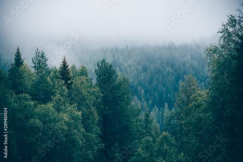 zielononiebieski-las-i-chmury