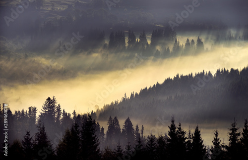 Foto op Aluminium Ochtendstond met mist Incredibly beautiful sunrise in the mountains. Coniferous trees in the fog and the rays of the sun through the foggy forest.