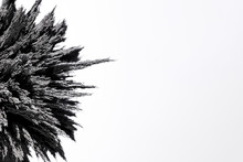 Close-up Of Magnetic Metallic Shaving On White Background
