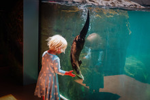 Little Girl Looking At Otter I...