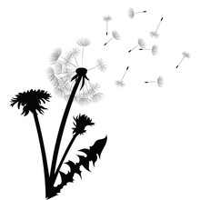 Silhouette Of A Dandelion With Flying Seeds. Black Contour Of A Dandelion. Black And White Illustration Of A Flower. Summer Plant.