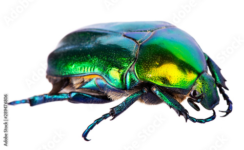 Photo Splendid green beetle isolated on a white background