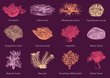 Vector Illustrations Of Color Corals. Collection Of Drawn Sea Polyps.