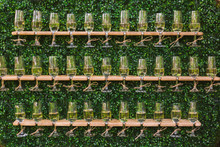 Unusual Creative Catering For Holiday Celebrations. Many Glasses With Champagne Isolated On Green Foliage Background. Horizontal Color Photography.