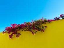 Mediterranean Color Contrast W...