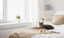 Pets, Christmas And Domestic Animal Concept - Tabby Cat Lying On Bed With Knitted Woollen Blanket At Home In Winter