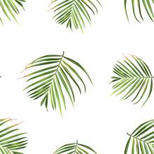 Palm Beach. Tropic Summer Jung...