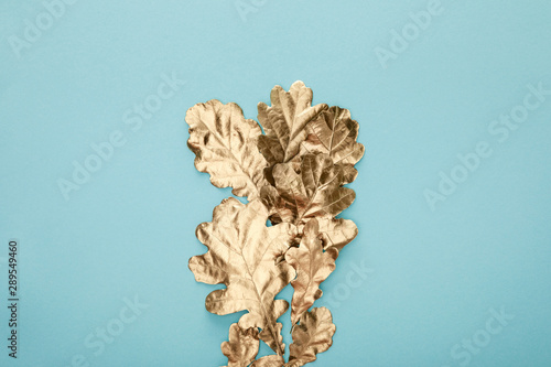 top view of autumnal golden foliage on blue background