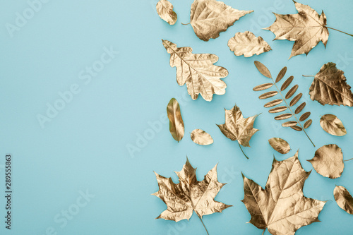 top view of autumnal golden foliage on blue background with copy space