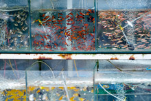 A Large Number Of Small Fish O...