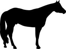 American Quarter Horse Vector Silhouette